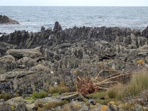 Kurz vor der Seebärenkolonie