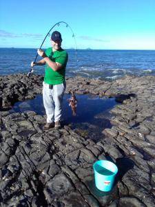 Mein giftiger Fisch, ein Roter Seebarsch