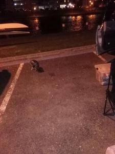 Katzenbesuch auf dem Parkplatz