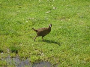 Weka, sehr frecher Vogel