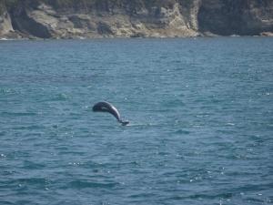 Kaikoura Delfinschwimmen