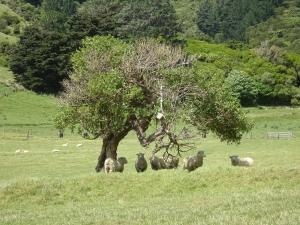 Auch Schafe brauchen mal Schatten